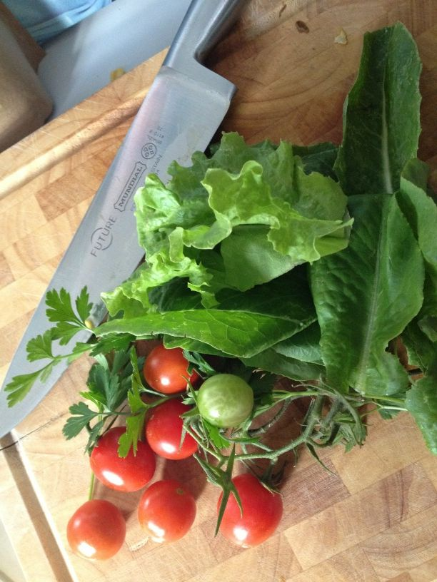 Vegetables from organic garden