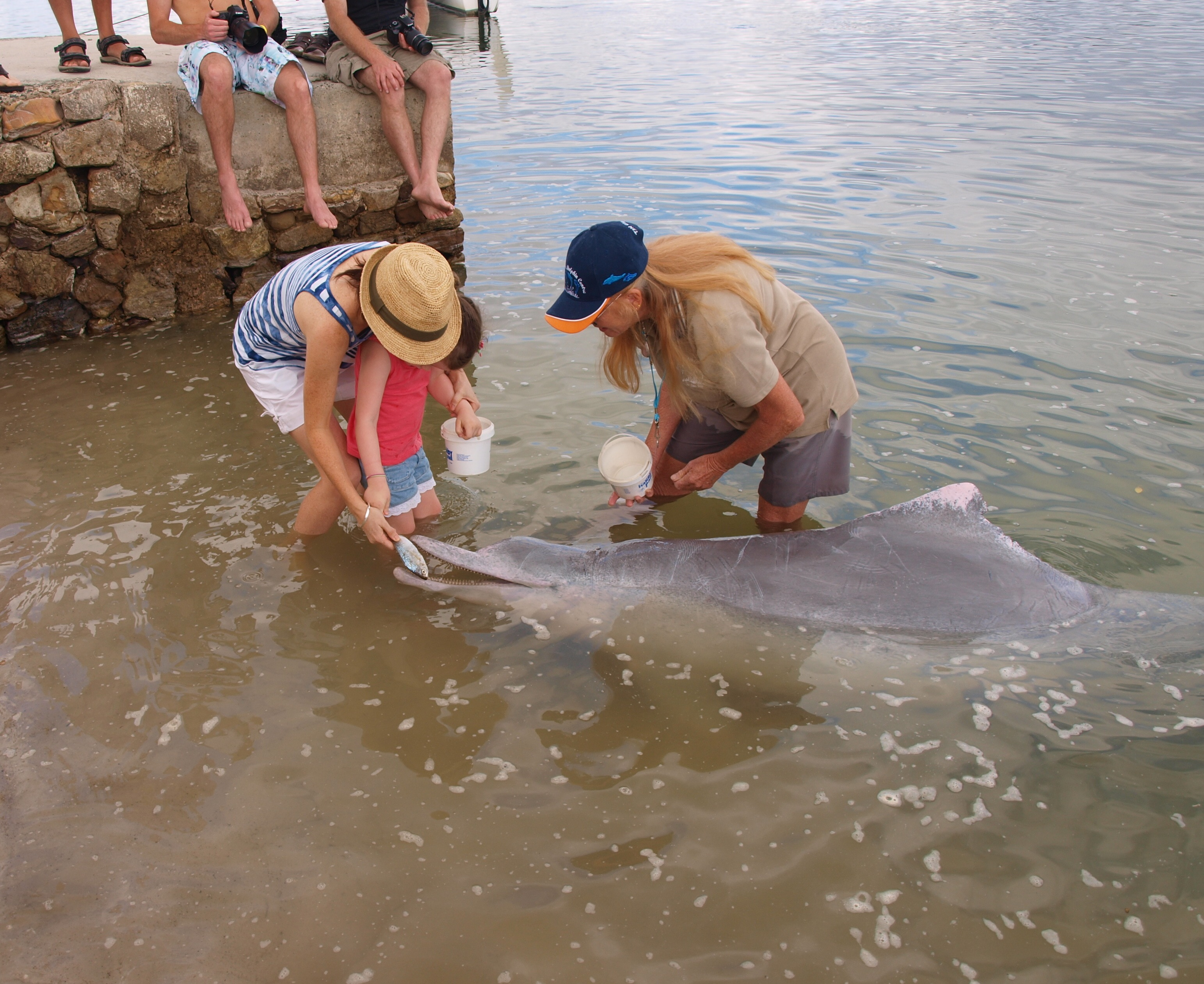 Feeding dolphins in the wild with my daughter who was a little nervous! - Tin Can Bay.